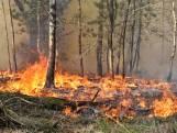 Brandweer zette zo'n 100 manschappen in voor zeer grote bosbrand tussen Tilburg en Moergestel