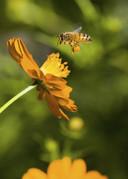 'Wij smeerden als kind een beetje honing op schaafwonden om de genezing te bespoedigen.' foto Thinkstock IPTCBron  Getty Images/iStockphoto  Bijen voor leven, Cover, foto Thinkstock;NR