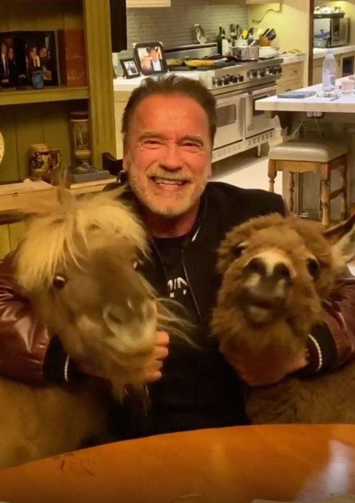 Arnold Schwarzenegger avec son poney Whiskey et son âne Lulu.