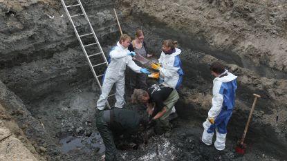 Koksijde graaft potvis uit 1989 op om te reconstrueren