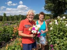Wie kleurige dahlia's wil hebben moet bij Jan en Marijke uit Wageningen zijn