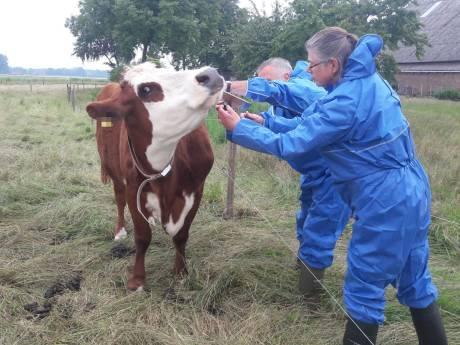 Hardere aanpak van justitie moet dierenleed in Oost-Nederland terugdringen