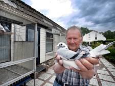 Duivenhouder Jos (77) steekt al zijn vrije tijd in zijn duiven: 'Maar bij m'n duiven heb ik elke dag vakantie'
