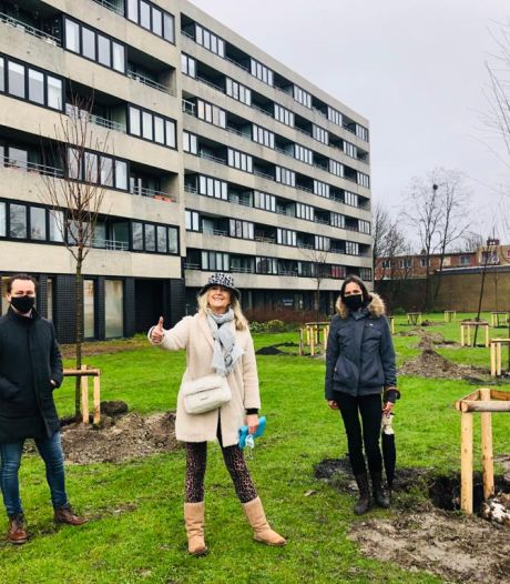 Brugge gaat sociale woonwijk opfleuren met 24 Japanse kerselaars en 100.000 bloembollen