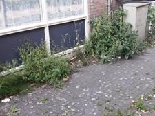 Bergen op Zoom over onkruid: 'Saver moet zaken op orde  krijgen, afspraak is afspraak'