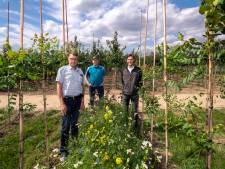 Agrariërs willen Betuwe mooier maken: 'Zo krijg je heel ander beeld van een bomenkwekerij'