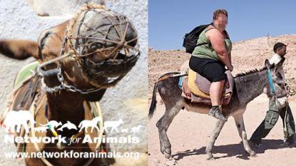 Activisten starten campagne tegen zwaarlijvige toeristen op rug van ezels in Griekenland