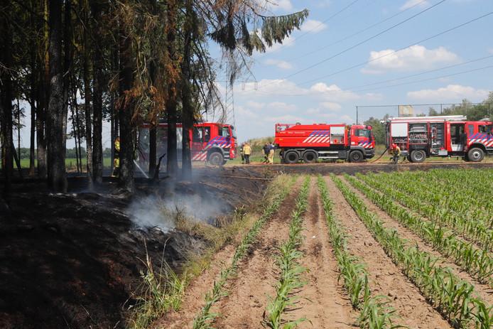 De bosbrand in Budel.