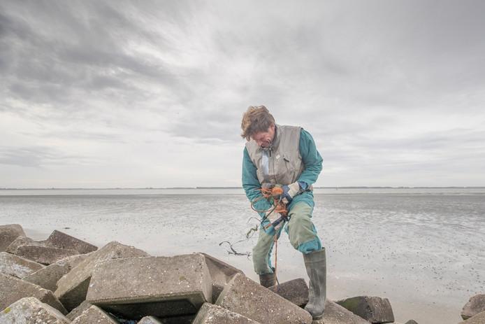 Johan Vermin is één van de vrijwilligers die zaterdag zwerfafval opruimt op het strandje van Baarland. Hier probeert hij een kluwen blauw en oranje draad tussen de stenen uit te trekken.