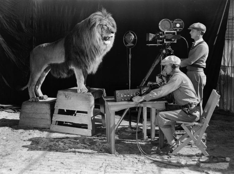 Opnamen van de schreeuw van Leo de Leeuw voor het logo van deMGM-filmstudio, 1928. Beeld Getty