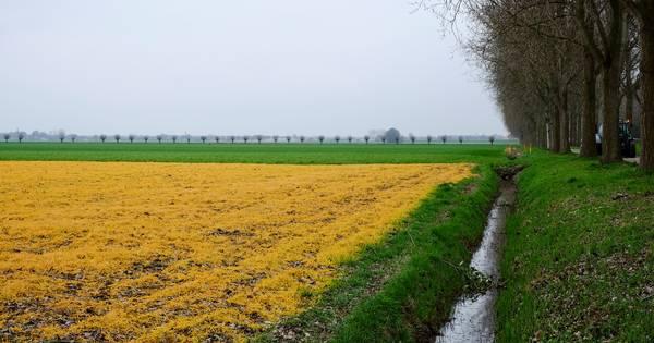 In Frankrijk is dit gif verboden, maar in Nederland spuiten we rustig door... | Columns | bndestem.nl