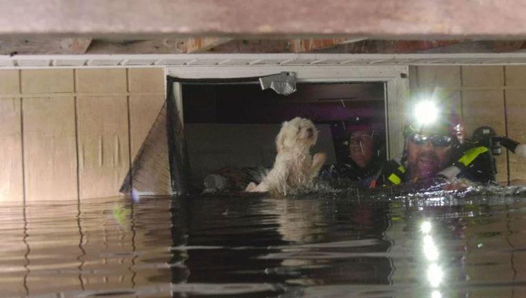 De reddingswerkers geloofden hun oren niet toen ze geblaf hoorden in het ondergelopen huis.
