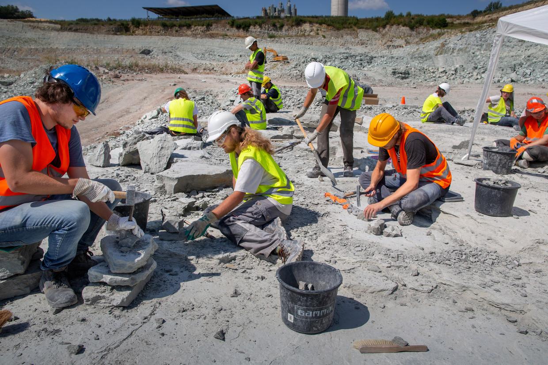 De zoektocht naar fossielen in de groeve van Winterswijk. Studenten en wetenschappers bewerken steen voor steen met hamer en beitel.