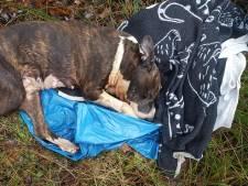 Macabere vondst; dode hond op veldje gedumpt in Almelo, politie speurt naar eigenaar