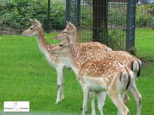 Blijdschap om nieuw hertenpark in Werkendam