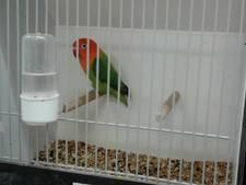 De Vogelvriend Nieuwkuijk beschermt 'levenswerk' van de liefhebbers