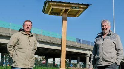 Grootste zwaluwverhuis ooit van start: lokroepen en kunstnestjes moeten 80 koppels van luchthaven weglokken