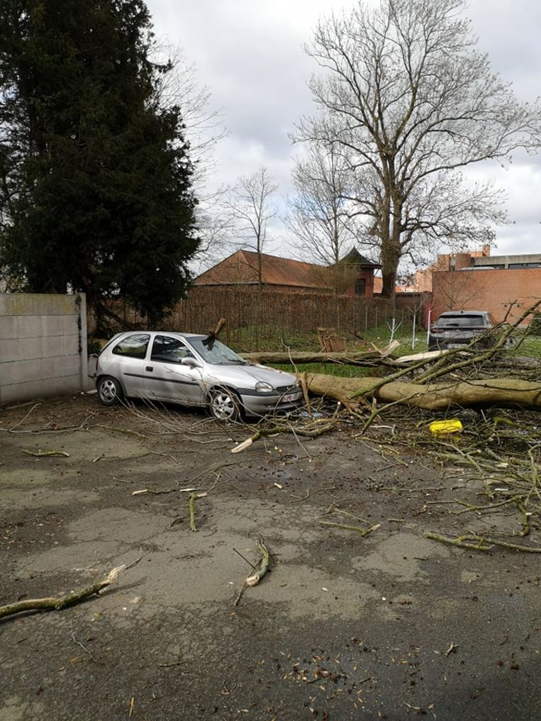 Een boom kwam op een auto terecht.