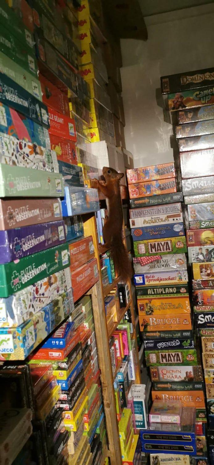 De eekhoorn tussen de puzzels in de Spellenzaak in Breda.