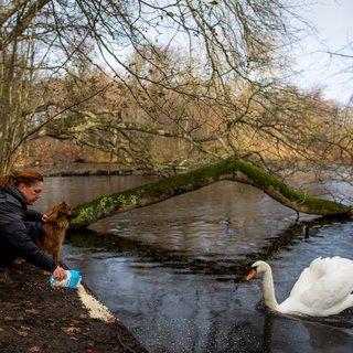 Vuurwerkvrije zone Den Haag werkte beter voor zwanen dan voor mensen