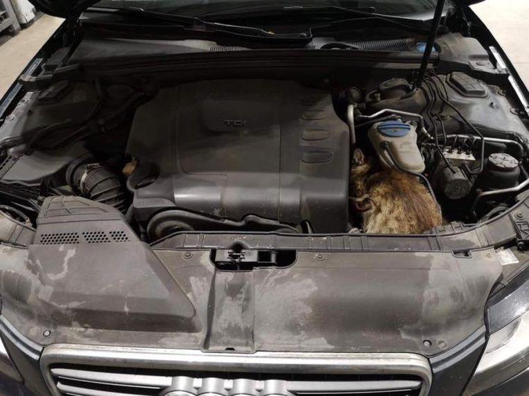 De kat zat doodsbang en verstijfd tussen de motor en de koelvloeistof.