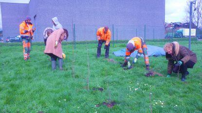 Ieper maakt werk van groenere bedrijventerreinen, afvalintercommunale IVVO plant als eerste bomen en struiken