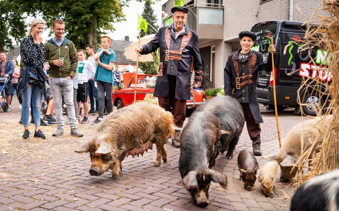 Bert Roelofs loopt met zijn zoon en varkens door Geffen.