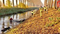 Brandweer haalt koe uit ijskoude water in Damme
