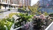 Sprankeltje hoop in coronatijden: bloemenpracht op Rector De Somerplein