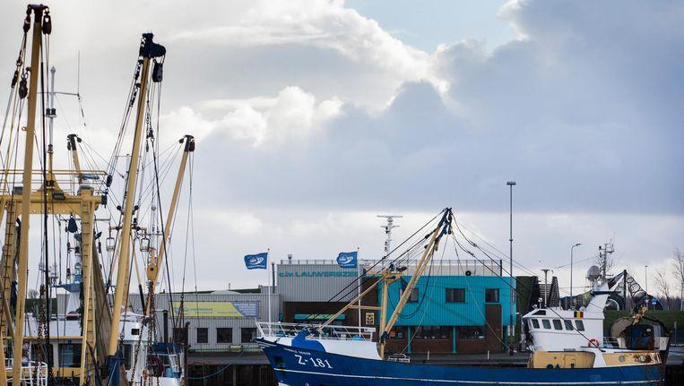 De kotter Z181 in de haven van Lauwersoog. Beeld anp