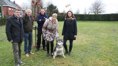 Honden mogen voortaan loslopen op weide aan kerkhof