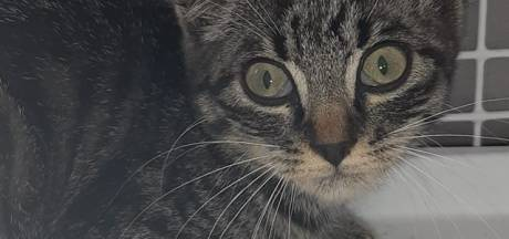 Jonge kat gered uit middenberm A15 bij Tiel