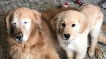 Geadopteerde puppy ontfermt zich over zijn blinde huisgenoot