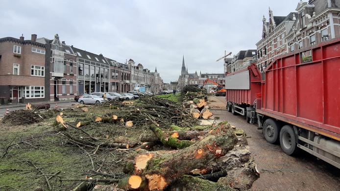 Weg is ook de laatste boom. De zieke kastanjes in de Parkstraat zijn in twee dagen tijd gerooid.