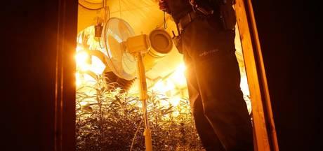 Wietkwekers in Zeeland tapten 1,9 miljoen kilowattuur stroom af
