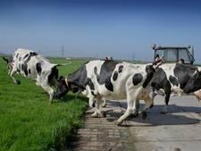 De buitenlucht lonkt! Veel koeien in deze regio mogen straks de wei in