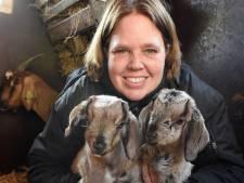 Eerste geitjes geboren bij kinderboerderij