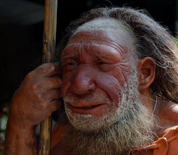 Reconstructie van een neanderthaler in een Duits museum. De uitgestorven mensensoort had een uitgebreide kennis van planten en hun pijnstillende en ontstekingsremmende eigenschappen.