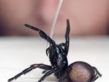 Après incendies et inondations, les Australiens doivent prendre garde aux araignées mortelles