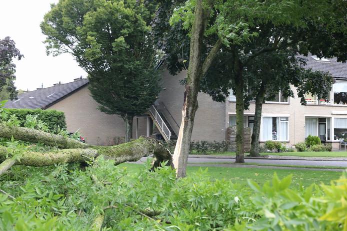 Op de De Withlaan in Baarn waaide vanochtend een boom om.