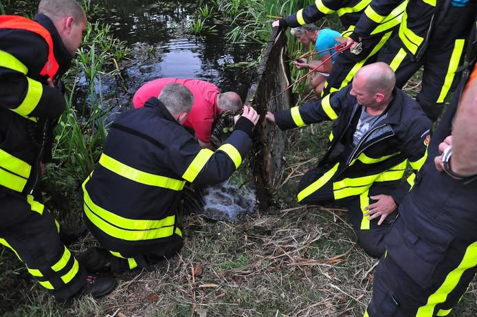 Vier jonge waterhoentjes zijn uit een waterput gehaald in Waalwijk.