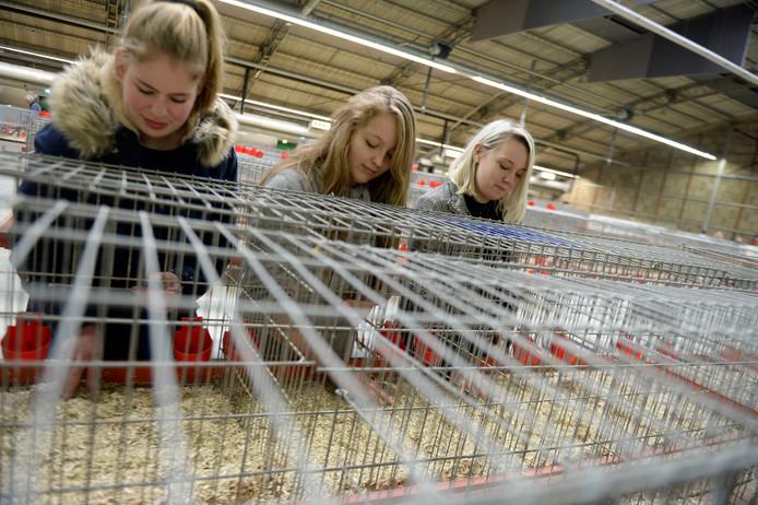 Komend weekeinde is de Oneto, de grootste kleindierenshow van de regio. Voorzitter Edgar de Poel wil het verder uitbouwen tot evenement. Studenten Ilse, Selina en Desy doen de opbouw.