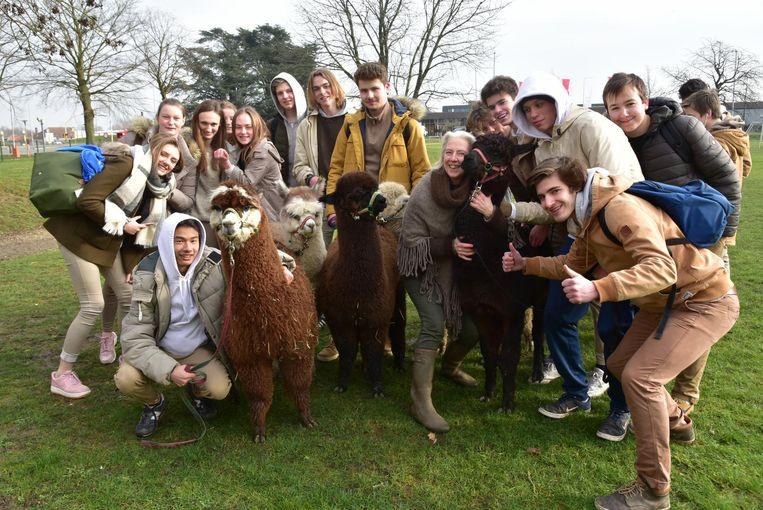Leerlingen van Mariagaard in Wetteren trekken op stap met een kudde Alpaca's.