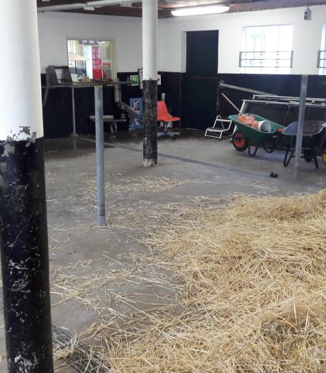 Het Hoogeland in Beekbergen bezuinigt 5,5 fte en álle koeien weg