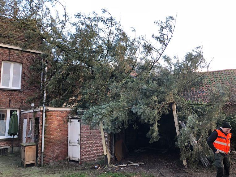 """""""Ik zei nog tegen mijn vrouw: die boom houdt het niet lang meer vol. Tien minuten later lag hij op ons huis."""""""