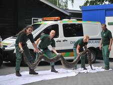 Enorme wurgslang gevonden in kuil langs spoor Oosterbeek