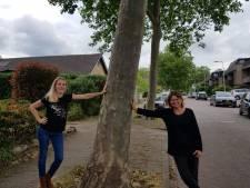 Wethouder vindt situatie 'onveilig', buurt vindt dat onzin: hoe 11 platanen 'n straat in Rijssen bezighouden