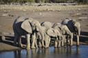 Autoriteiten proberen nu water op te pompen uit boorgaten voor de meer dan 45.000 olifanten en andere dieren in het park, maar dit was niet voldoende om voor alle dieren te zorgen.