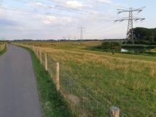 Groep tieners, 'gewapend' met flessen, gaat schapen te lijf in Dordrecht