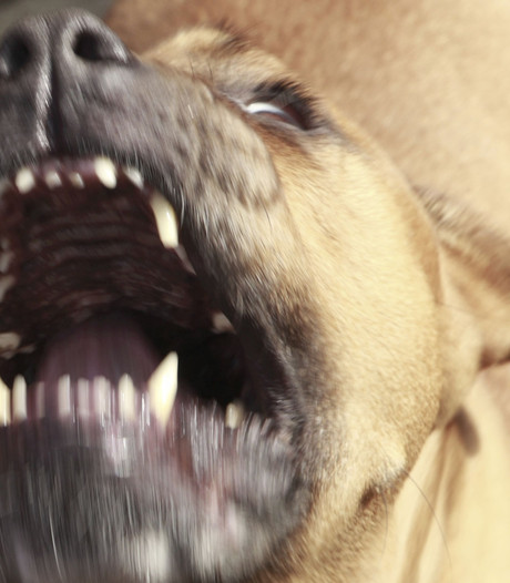 Man gebeten door hond in Gorinchem